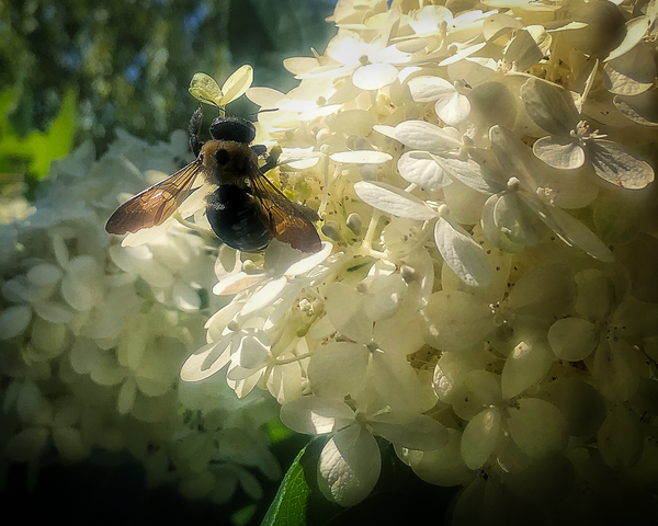 A Bee's Heart Photography Art | Happy Hogtor Photography