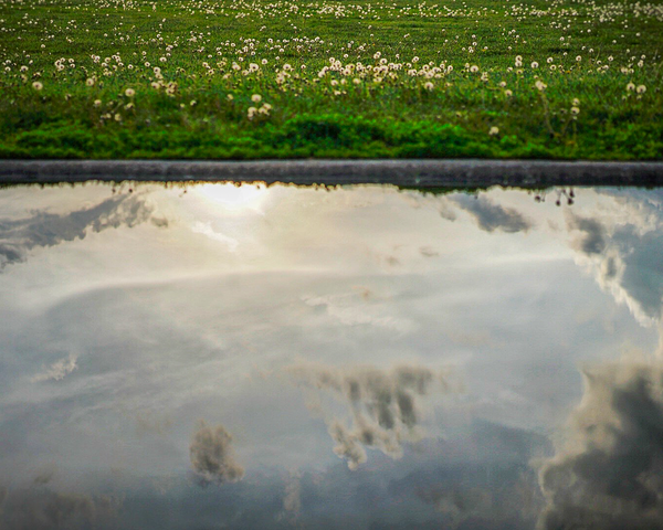 Reflections Of Life Photography Art | Happy Hogtor Photography