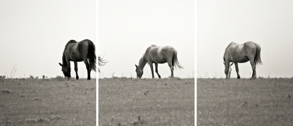 Wild Horses of the Flint Hills