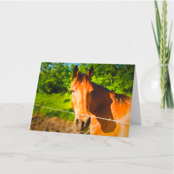 Horse In Pasture   Blank Note Card Set  | Grace Fine Art Photography by Beth Sheridan