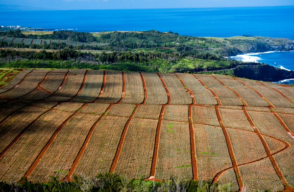 Aerial Maui Agriculture Photography Art   Eric Hatch