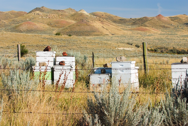 Dscf5635 Wyoming Beehives  Photography Art | Eric Hatch
