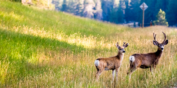 Dscf6410 Mule Deer Wyoming Photography Art   Eric Hatch