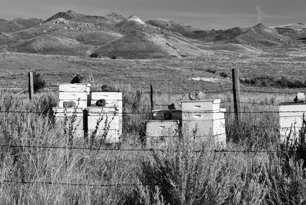 Wyoming Beehives Bw Photography Art | Eric Hatch