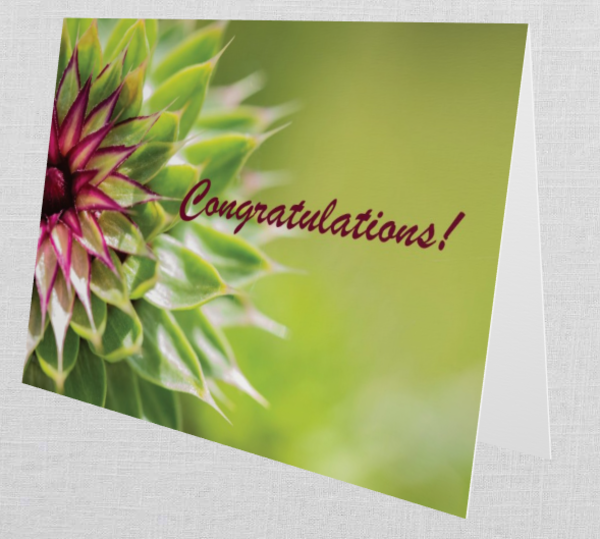 """Meadow's Thistle   """"Congratulations""""   Greeting Card (Set Of 10 W/Envelopes)   Tamea Travels"""