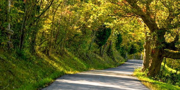 Kentucky Fall Photography Art | Eric Hatch