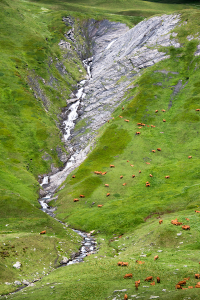 One Hundred Cows French Alps Photography Art   Eric Hatch