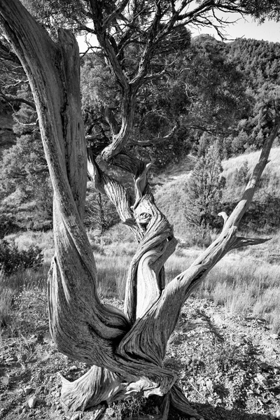 Twisted Tree Photography Art | Eric Hatch
