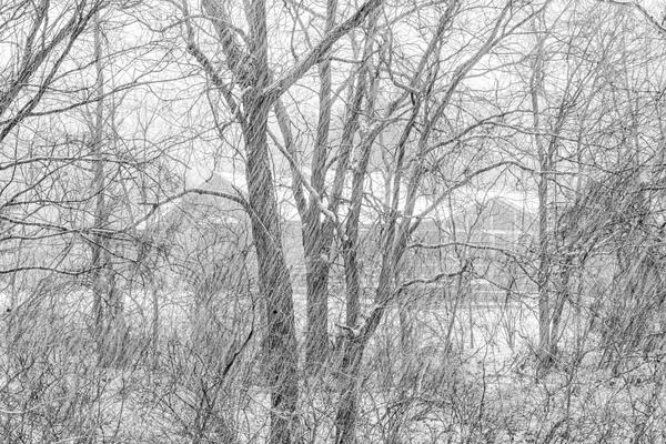 Suburban Snowfall Bw High Key Photography Art | Eric Hatch