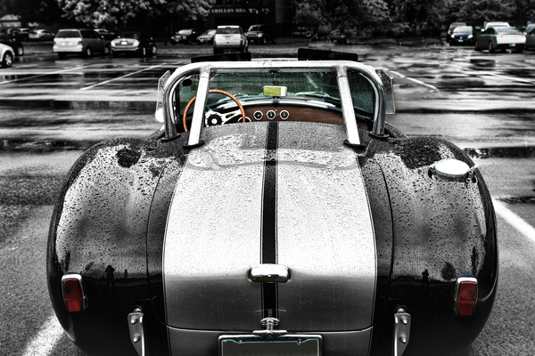 Snake In The Rain Ac Cobra Photography Art | Eric Hatch