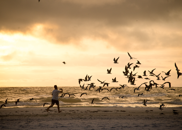 Dancing With Gulls Photography Art | Eric Hatch