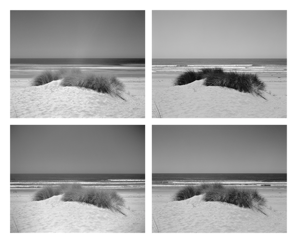 California Landscape Photography-Dune Grass in Sand Dunes Seascape-Polyptych