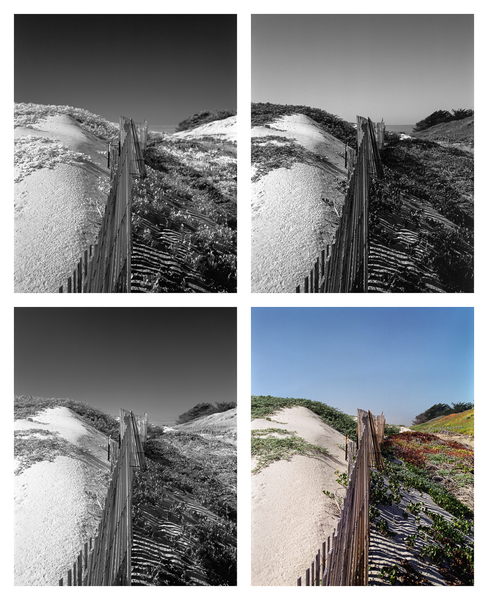California Landscape Photography-Sand Fence at Surf Dunes-Polyptych Art