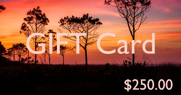 3b Photography Gift Card - $250.00
