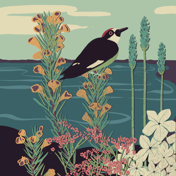 The Bird and the Lake - peaceful illustration - available in print