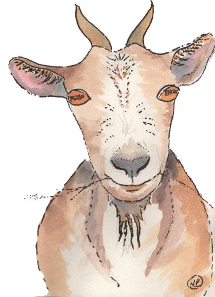 Grinning Goat Art | Color Splash Ranch