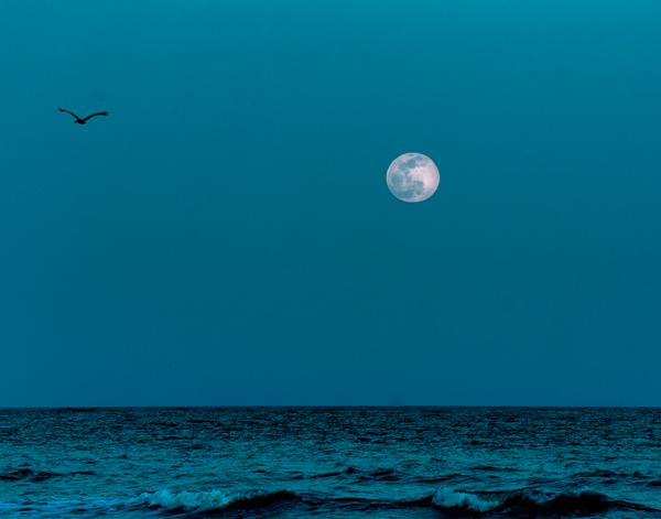 fripp-moon