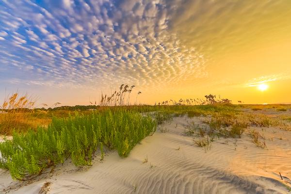 dune-love
