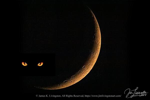 Cat In The Moon Photography Art   Jim Livingston Art