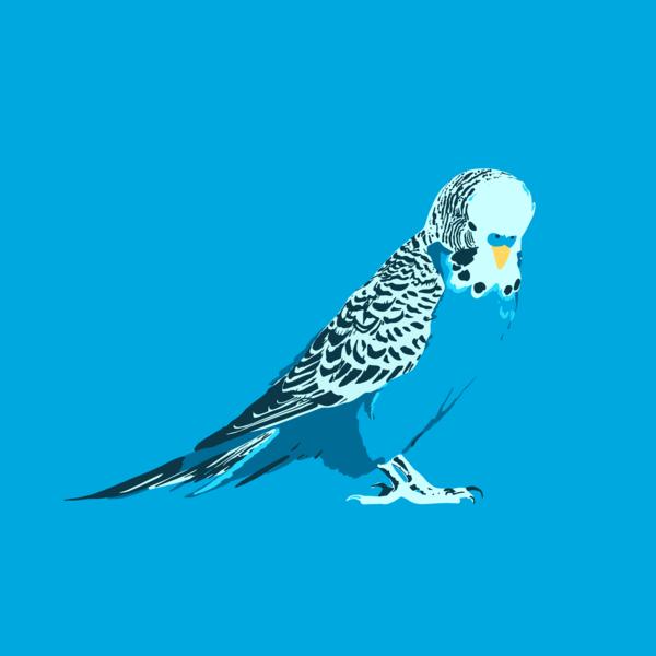 Blue Budgie Art | Davida Fernandez Studio