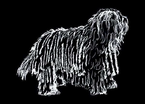 Bergamasco 5x7 White On Black Transparent Bg Art | Marie Stephens Art