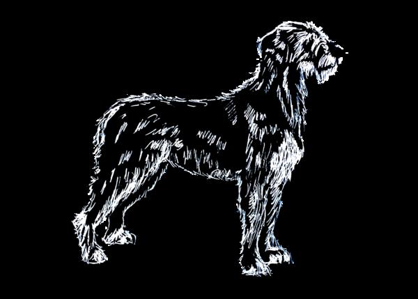 Irish Wolfhound White On Black 5x7 Art | Marie Stephens Art