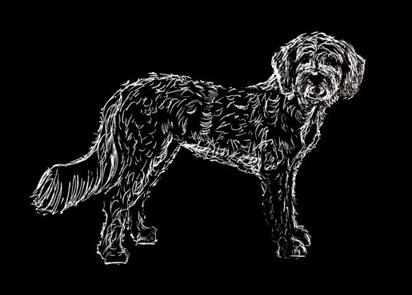 Goldendoodle White On Black 5x7 Art | Marie Stephens Art