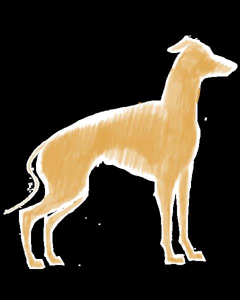 Italian Greyhound Tan Oil Brush 19 Art | Marie Stephens Art