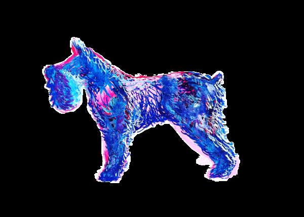 Schnawzer Blue And Pink Ink Transparent Bg 5x7 Art | Marie Stephens Art