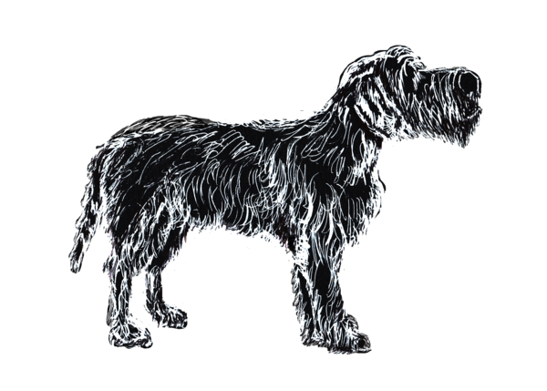 Wire Haired Pointing Griffon White On Black 5x7 Art | Marie Stephens Art
