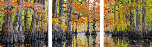 Tranquility triptych - Louisiana swamp fine-art photography prints