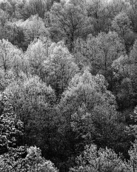 Forest   The Color Of Spring In B&W Photography Art | Robert Vielee Photography
