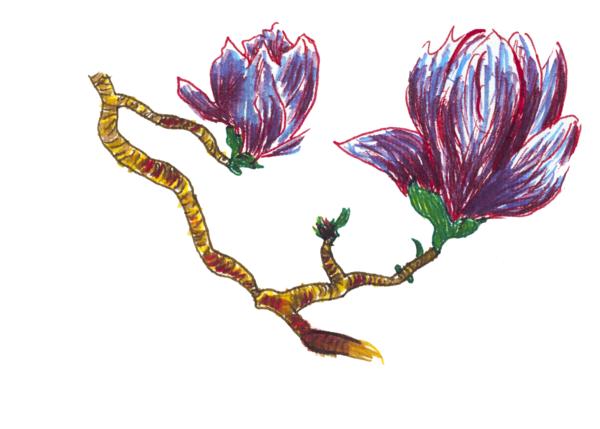 Merch: Magnolia Blossoms Art   Off The Edge Art