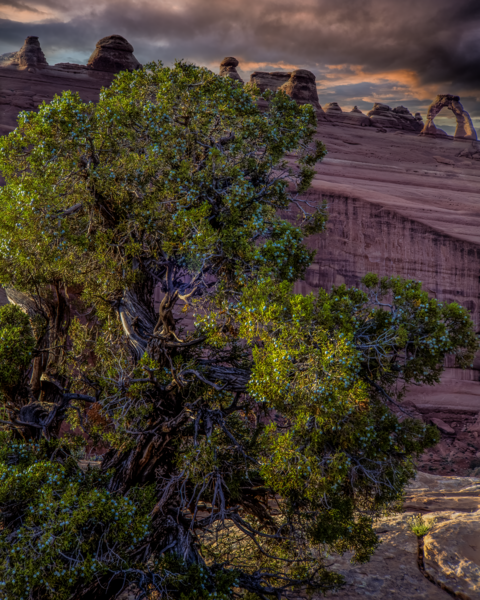 Utah Juniper Delicate Arch Photography Art | Robert Vielee Photography