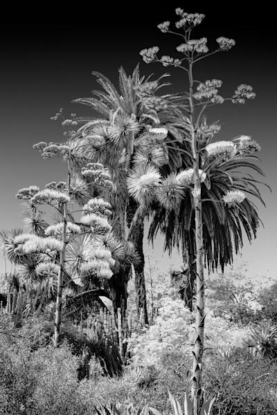 Cactus Garden Art | Light Pixie Studio