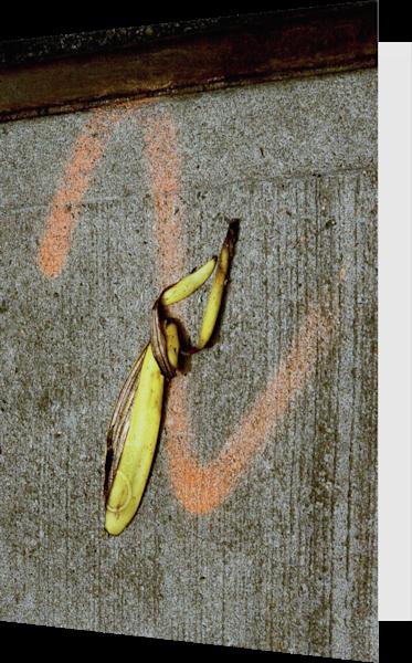Bronx Banana Abstract Sidewalk Greeting Card – Sherry Mills