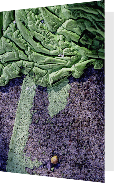 Green Abstract Brooklyn Sidewalk Art Card – Sherry Mills