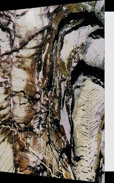 Brooklyn Botanic Abstract Fossil Art Card – Sherry Mills