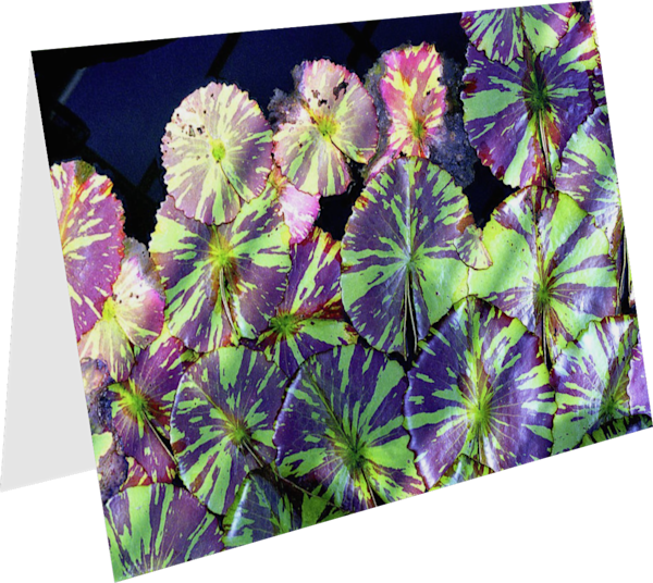 Purple And Green Lily Pads Art Greeting Card – Sherry Mills