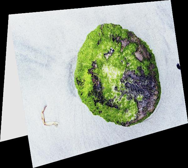Long Beach Stump Abstract Moss Greeting Card – Sherry Mills