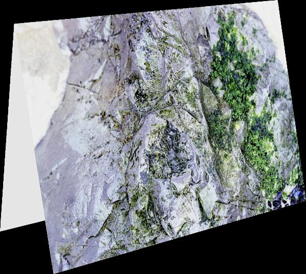 Long Beach Rock Close-Up Art Greeting Card – Sherry Mills