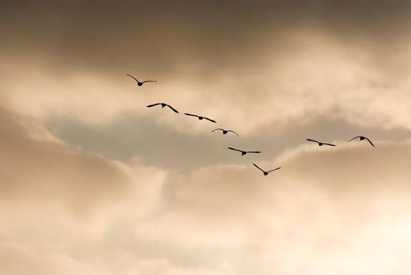 Dawn Flight Photography Art | Hatch Photo Artistry LLC