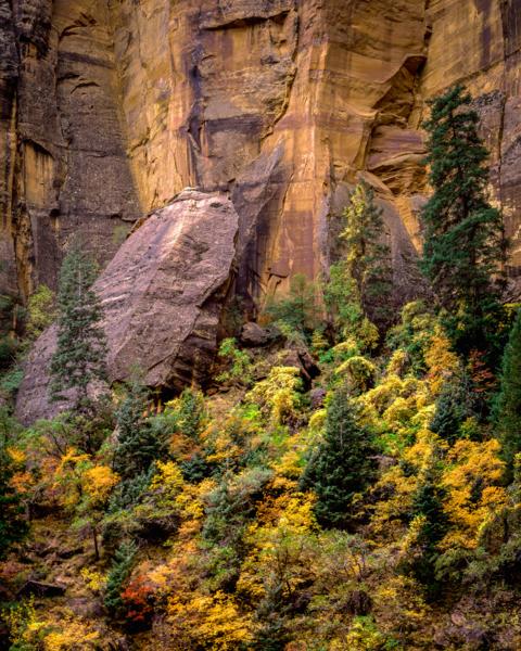 Autumn In Zion Heap Canyon Photography Art | Robert Vielee Photography
