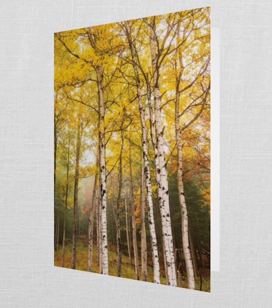 Vertical Birch Trees Card | Kurt Gardner Photogarphy Gallery