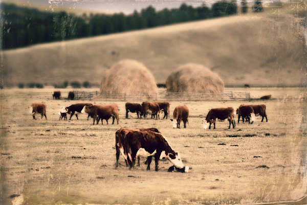 Cattle Ranch Art Landscape