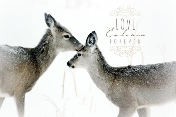 Deer Love Endures Forever Art