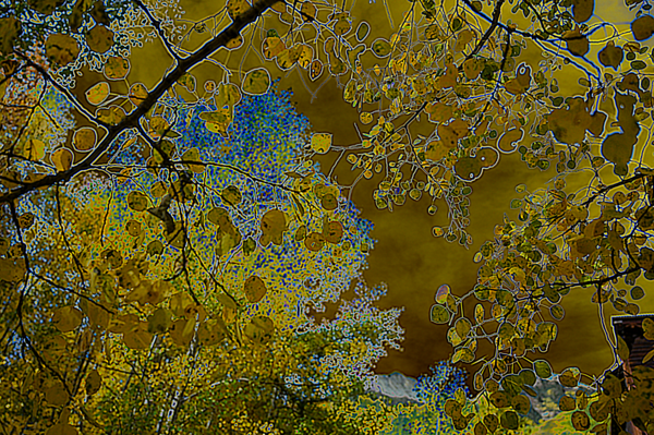 Aspen Dreams Merch Photography Art   Silver Spirit Photography