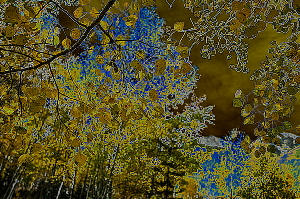 More Aspen Dreams Merch Photography Art   Silver Spirit Photography