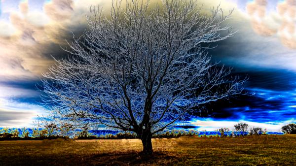 Kansas Tree 2 Merch Photography Art   Silver Spirit Photography