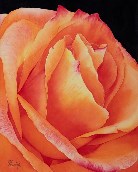 Fire Rose Art | victoriabishop.art